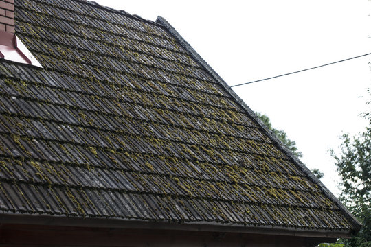 tile on the roof are covert with moss