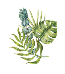 Composition of monstera, areca, fan and banana palms leaves and protea flower, colored pencil illustration isolated on white background. Hand drawn floral composition of palm leaves and protea flower