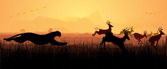 Cheetah chasing deers