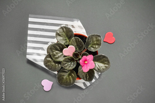 Beautiful pink pansy flowers close up in gray background delicate beautiful pink pansy flowers close up in gray background delicate violet mightylinksfo