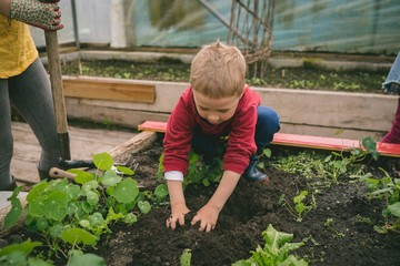 Kid planting in greenhouse