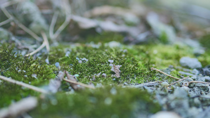 Green moss. Selective focus with shallow depth of field.