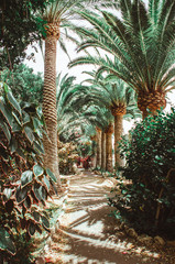 Nature poster. Alley of palm tree. Perspective