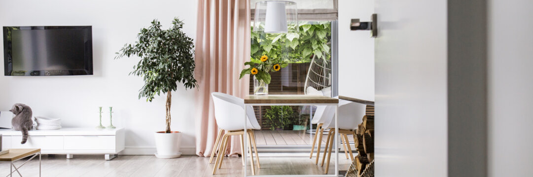 Real photo of white living room interior with fresh plant, dining table with flowers and cat sitting on cupboard under TV