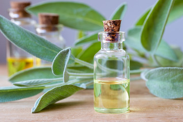 Fototapeta A bottle of sage essential oil with fresh sage obraz