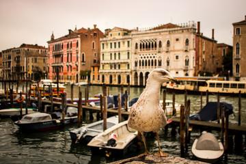 Gaivota em Veneza