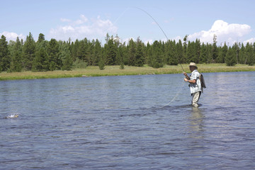 Fly fisherman catching fish in river