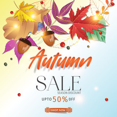 Autumn sale background layout decorate with leaves for shopping sale or promo. Autumn special offer design vector.