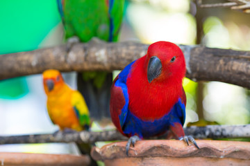 Parrot red.