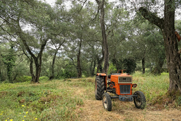 old tractor in an olive tree plantation at Corfu Island (Greece)