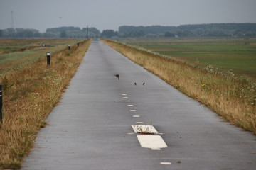 fields in the Eendragtspolder in Zevenhuizen the Netherlands, a polder used for water storage to protect Rotterdam agains flooding.