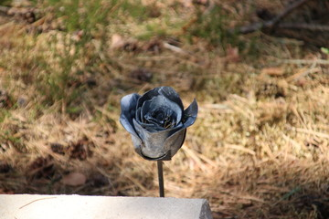 Black metal rose on gravestone on field of honour in Loenen, where soldiers, resistance members, political prisoners or civilians are buried after world war 2