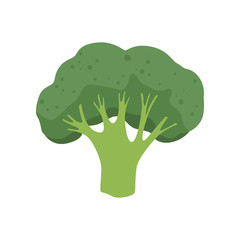 Broccoli vegetable, vegetarian healthy food vector Illustration on a white background