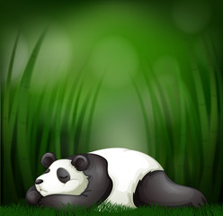 Sleeping panda on bamboo template