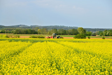 Field of rapeseed in Steiermark  Austria in spring season