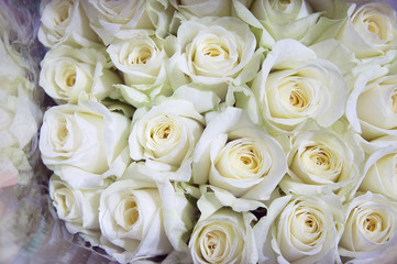 White roses on the market. Rose in a flower shop.