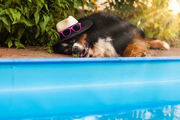 Hund liegt erschöpft am Pool in der Sonne, bekleidet mit Hut und Sonnenbrille