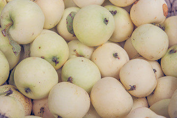 Apples in pastel colors