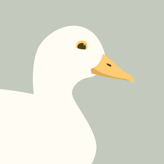 buff duck  vector illustration  flat style  profile