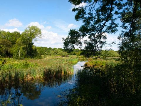 Rainton Wetland Nature Reserve