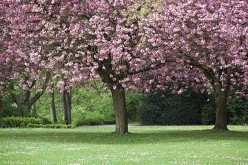 Park with blooming trees. Shot in Hamburg, Germany.