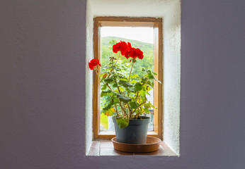Flower pot with red flowers on a window sill in a wall in sunlight
