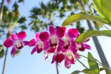 Tropical pink orchid flower