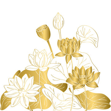 vector contour color gold  lotus lily Chinese Asian symbol flower card