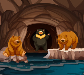 Bears living in the cave