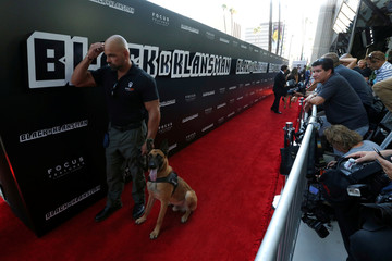 "A K-9 bomb detection unit is pictured at the premiere for ""BlacKkKlansman"" in Beverly Hills"