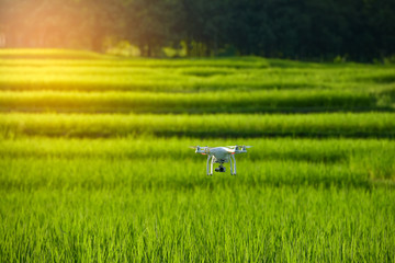 Drone flying over green wheat field in spring. Technology innovation in agricultural industry Asia