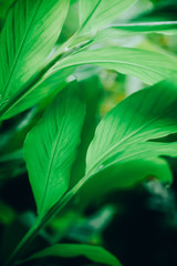 green leaf background. green leaves in the graden