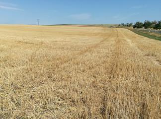 Feld nach Ernte