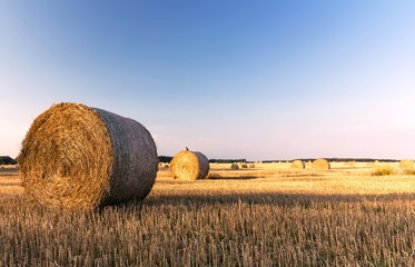 straw bales in a field with blue sky, summer morning