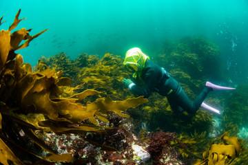 海藻の森で獲物を探す海女