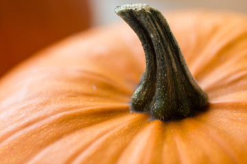 vegetables, harvest and thanksgiving concept - close up of pumpkin with stem