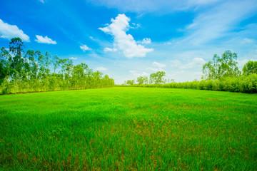 Grass, Field, Meadow, Tree, Lawn
