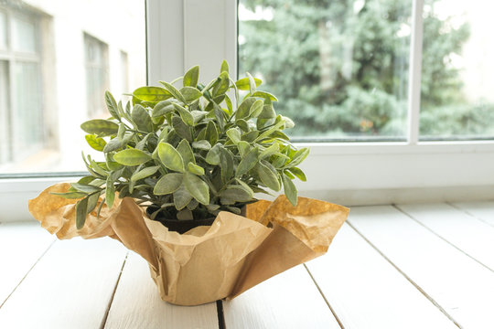 An artificial flower in a pot decorated with brown paper on a light window sill. Flower for office concept.