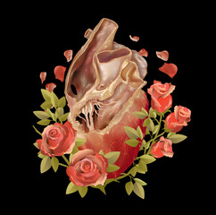 Anatomical heart with floral rose, vintage in vector illustration for T-shirts, tattoo, card.