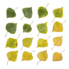 Birch Leaves Collection