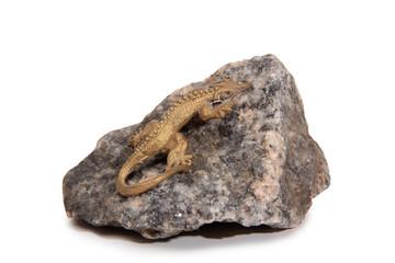 Bronze lizard on a granite stone on a white background