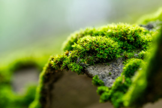 Moss on a tree in the forest