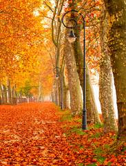 Nice autumnal urban scene