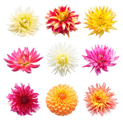 Set flowers dahlias isolated on white background. Flat lay, top view. Super collection. Easter. Pink, red, purple, yellow, orange