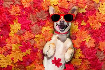 Printed roller blinds Crazy dog autmn fall leaves dog