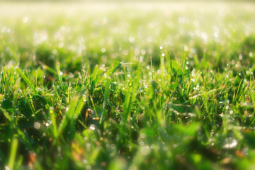 Spring green grass sunny summer background. Perfect beautiful nature close up view