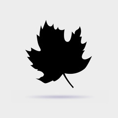 Maple leaf vector icon isolated on gray background.