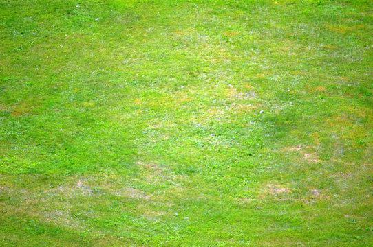 зеленый газон с травой