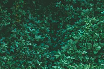 green bushes wall