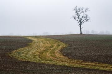 Plow patterns on a farmers field in Ohio Fotoväggar
